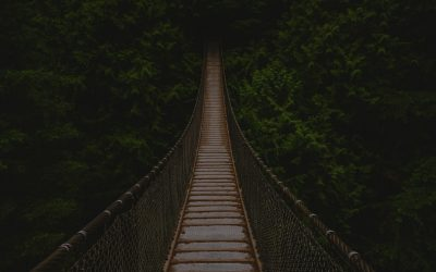 Bridge leading into trees
